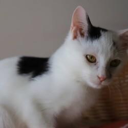 【完全予約制】2/23(祝)ハレノテラス保護猫譲渡会 サムネイル2
