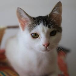 【完全予約制】2/23(祝)ハレノテラス保護猫譲渡会 サムネイル3