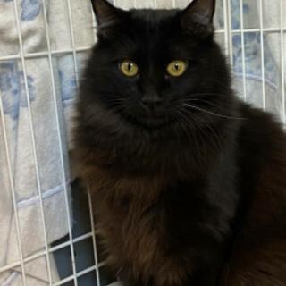 ビビリなゴージャス黒猫、黒太くん♪