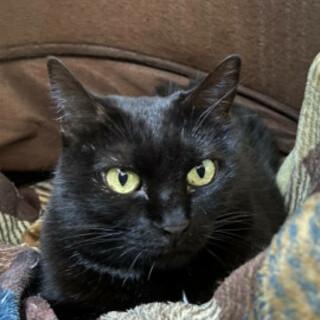 真っ黒美猫、くろっちちゃん♪