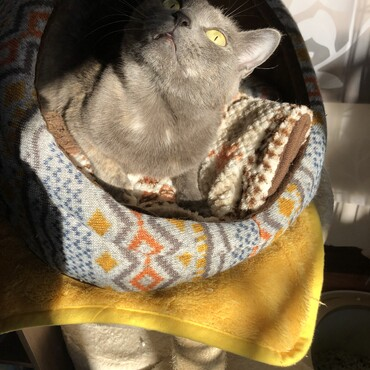 寒い冬はお家に入って日向ぼっこ!