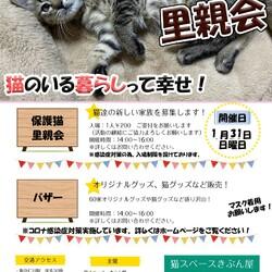 宝塚wakuwaku保護猫里親会