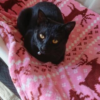 元気いっぱいの黒猫♂2匹です!
