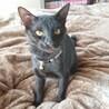 元気いっぱいの黒猫♂2匹です! サムネイル4