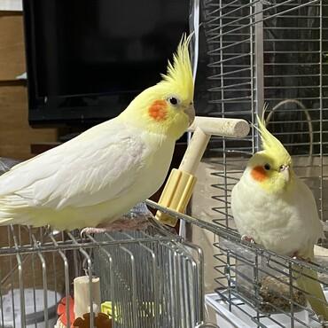 放鳥すると駆け寄るニ羽。