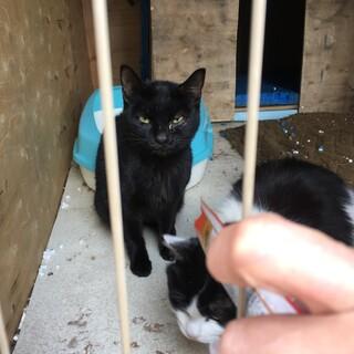 大人しいスタイリッシュな黒猫ちゃんです