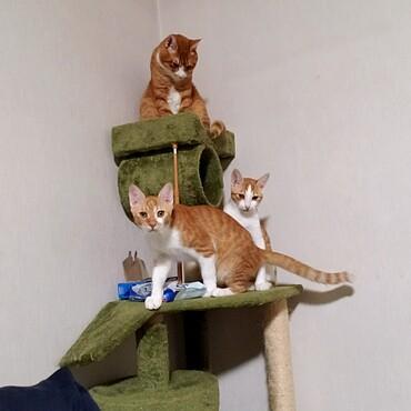 3匹乗れるキャットタワー買わなきゃ(笑)毎日取り合い!早い者勝ち!!!