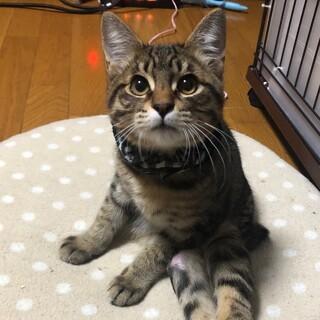 靴下をはいた猫【あんよ】下半身麻痺です。