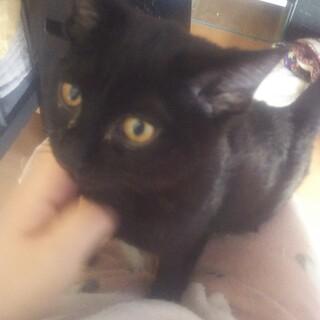 【交渉中】黒い子猫ちゃん
