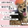 倉敷市保健所譲渡会直前!