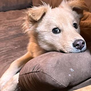 mix♂子犬「ぽんちくん」