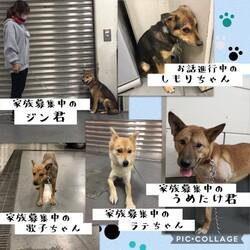 「倉敷市保健所の野犬のならし」サムネイル3