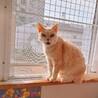 【たまちゃん】飼い主さん施設入居のため サムネイル2