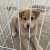 人懐こい保護犬を迎えませんか?