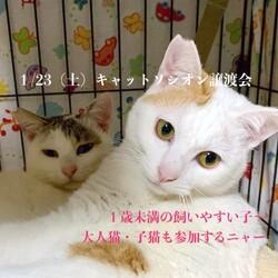 *子猫と大人猫*キャットソシオン譲渡会 サムネイル1