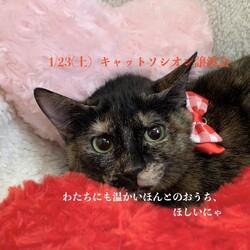 *子猫と大人猫*キャットソシオン譲渡会 サムネイル2
