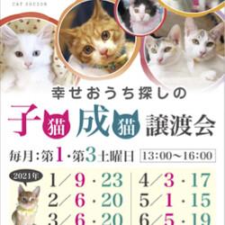 *子猫と大人猫*キャットソシオン譲渡会 サムネイル3
