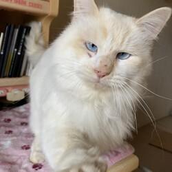 「保護した猫がエイズでした。」サムネイル1