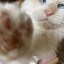 「保護した猫がエイズでした。」サムネイル2