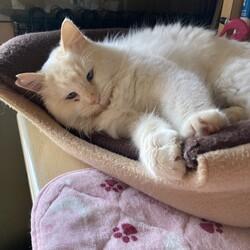 「保護した猫がエイズでした。」サムネイル3