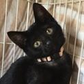 おとなしい黒猫★2ヶ月半