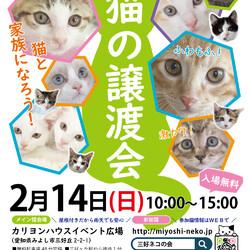 3ヵ月の子猫数匹参加・愛知県みよし市