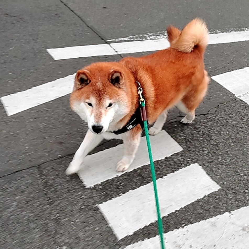 橙daidaiのカバー写真