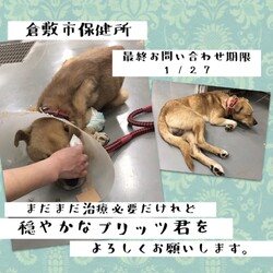 「人の優しさを知った野犬プリッツ君→譲渡決定!」サムネイル3