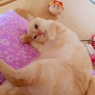 雑種の白猫メス(一時停止中)