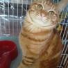 募集停止猫との生活が初めての方にもお勧め サムネイル3