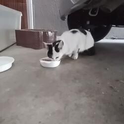 やっぱり迷い猫?