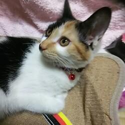 2/21市川市地域猫活動団体ウイング譲渡会