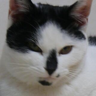 じゃれるの大好き!生後5か月の白黒猫