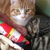 長崎県央犬と猫の会(保護活動者)