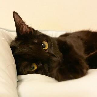 家族には甘えたさん♡黒猫『ミーちゃん』