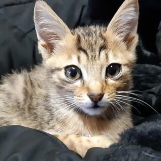 めちゃかわハッピー美猫の子猫ちゃん