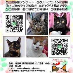 LINEオンライン譲渡会(LIVE)!!