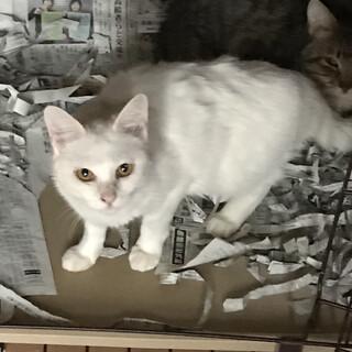 白猫 おとなしい