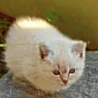 可愛いい元気な子猫優しい家族募集中‼︎