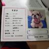 竹千代(たけちよ)☆マイペースな甘えん坊チワワ♂ サムネイル4