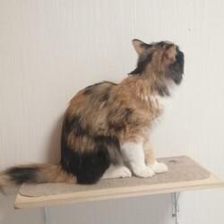 「大雪の次の日猫が来ました!!!!!」サムネイル3