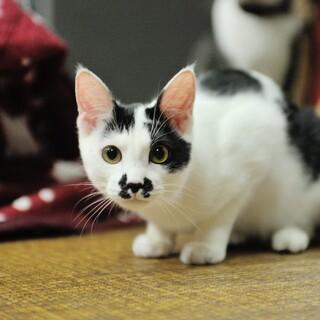 甘えん坊の白黒猫ちゃん☆みずき