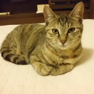個人で保護中のネコ(7ヵ月)