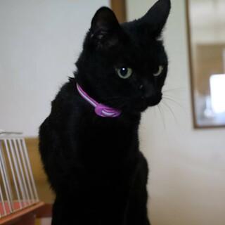 美ニャンの黒猫☆くろみちゃん
