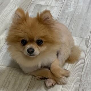 抱きしめたくなる可愛いさ❤︎甘えん坊のひまりちゃん