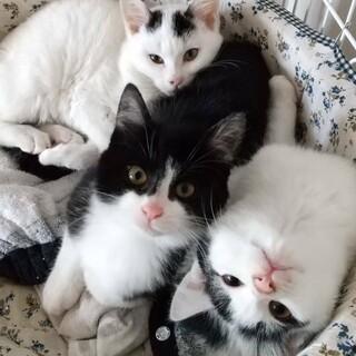 仲良し三兄弟