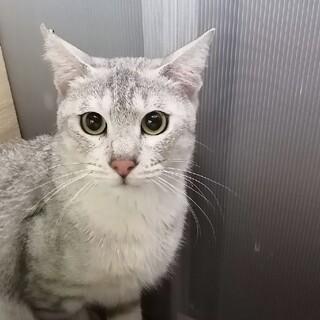 【1/31譲渡会】多頭飼育崩壊レスキュー猫