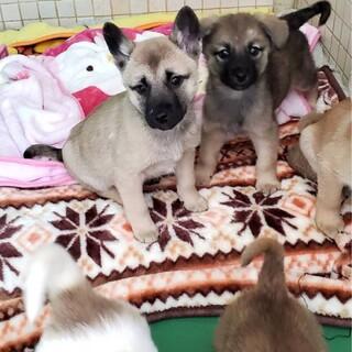 子犬の女の子達を暖かい家庭へ【県外可】