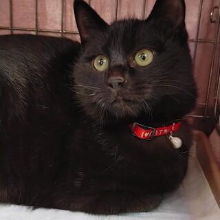 黒猫ワンパク兄弟「マサ」
