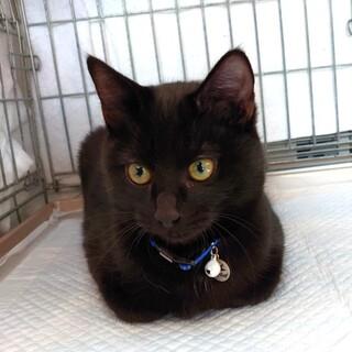 黒猫ワンパク兄弟「ムネ」